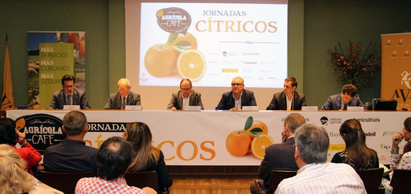 """Arnandis: """"Hay futuro para la citricultura, pero pasa por modernizar el sector e incorporar a los jóvenes"""""""