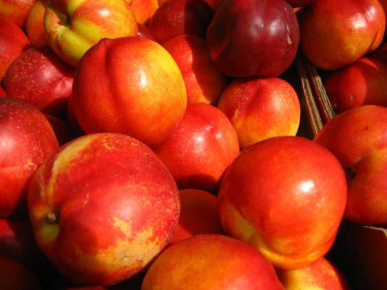 La fruta de hueso recupera su potencial productivo en España y en Europa y ofrecerá una calidad óptima