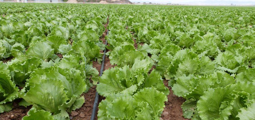 EuroChem Agro Iberia presenta Nitrofoska® solub, la nueva gama de productos para fertirrigación