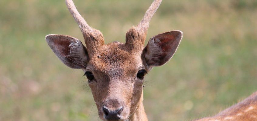 La fauna salvaje crece fuera de control y dispara un 30% los daños en la agricultura con pérdidas de unos 26 millones