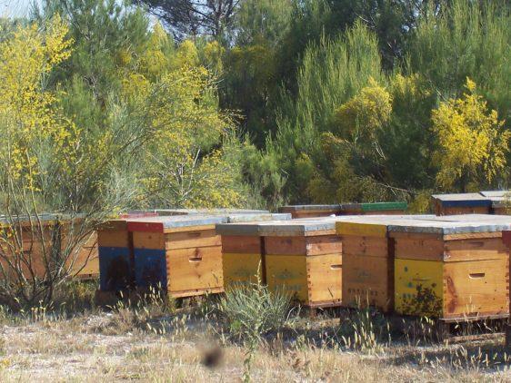 Agricultura convoca ayudas por 1,4 millones de euros para mejorar la producción y comercialización de miel