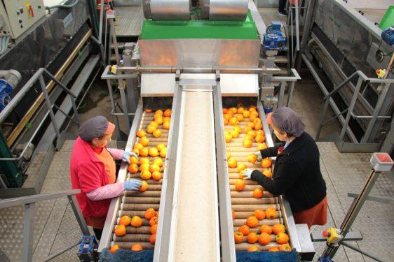 Cooperativas Agro-alimentarias de España valora que se incluyan ciertas especificidades de las OPFH cooperativas en los nuevos Reglamento europeos