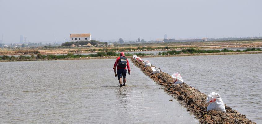 Federació y la Conselleria de Agricultura colaboran en el desarrollo de la campaña contra el chilo en los arrozales valencianos