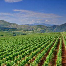 Reequilibrio de la cadena, renta agraria y el reto medioambiental, claves para el futuro de la PAC