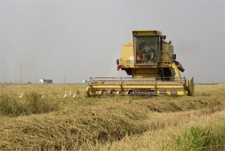 Se alcanza un preacuerdo para la quema de la paja del arroz