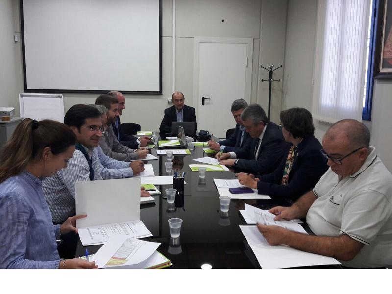 Cooperativas Agro-alimentarias de España prevé una producción de aceite de oliva de 1.100.000 toneladas